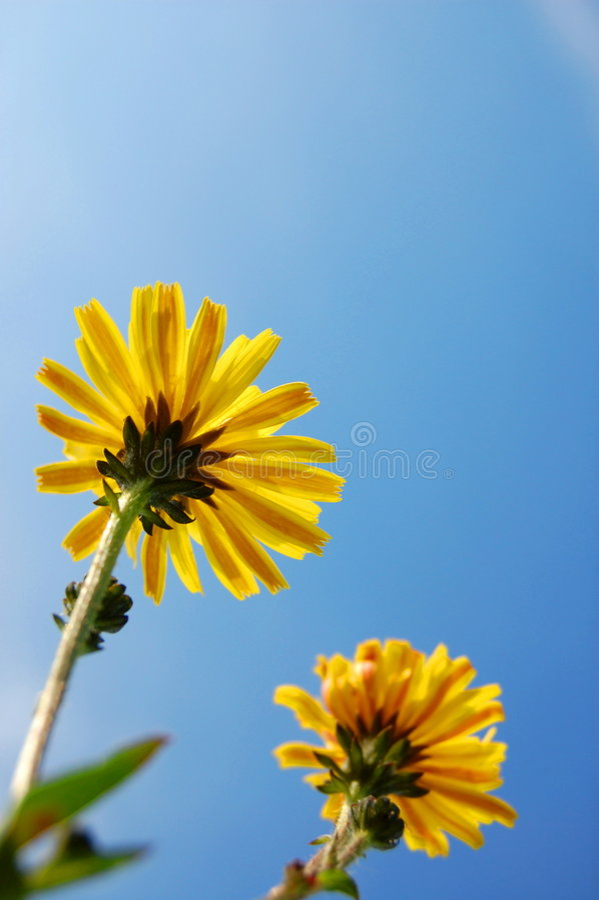 blå blommaskysommar under royaltyfri foto