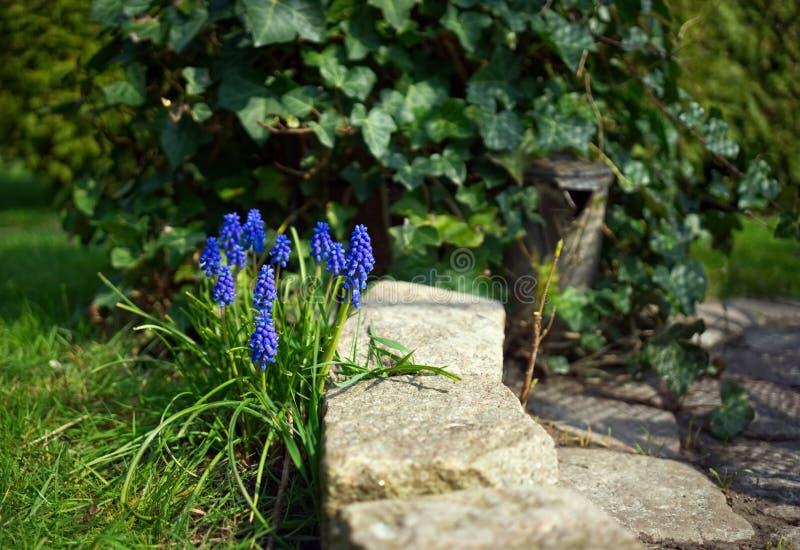blå blommaträdgård royaltyfri fotografi