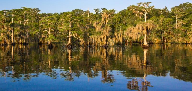 Blå cypress sjö arkivfoton