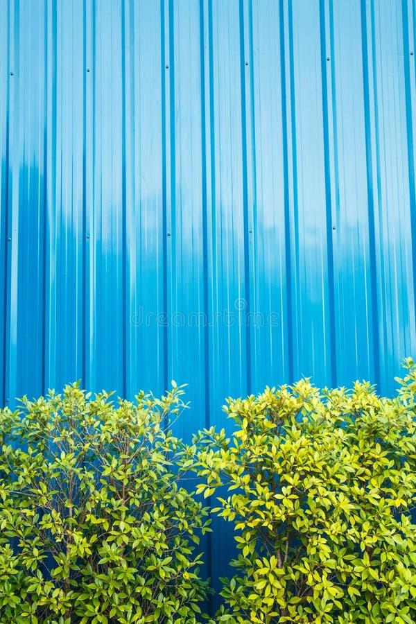 Blå färg korrugerade metallarket och det lilla trädet royaltyfri fotografi