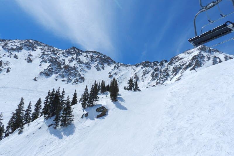 Blå fågel på En-handfatet; Arapahoehandfat, Summit County, Front Range, Colorado royaltyfria foton