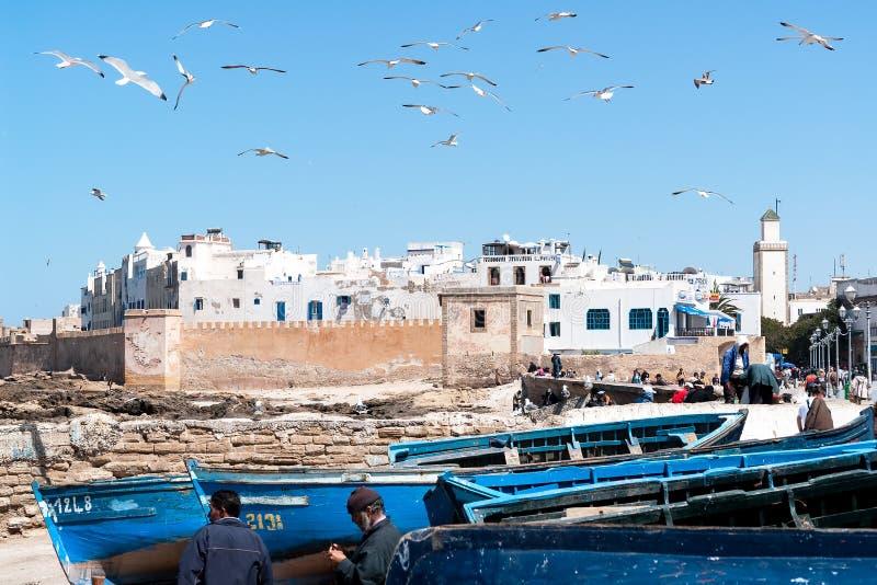 Blå fiskebåtar och seagull i Essaouira - Marocko royaltyfri foto