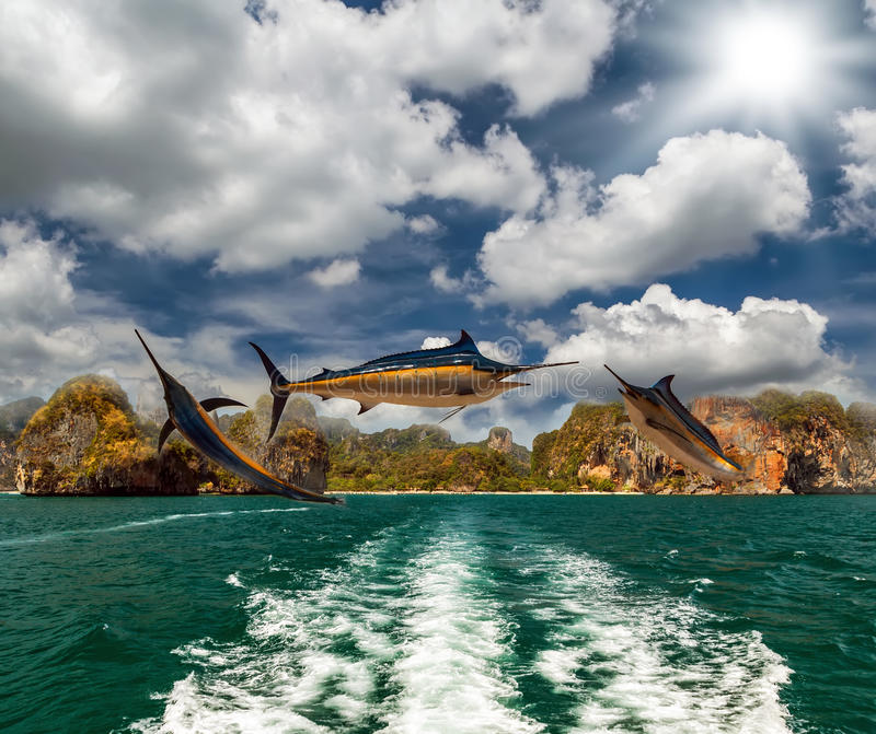 blå fiskmarlin royaltyfri bild