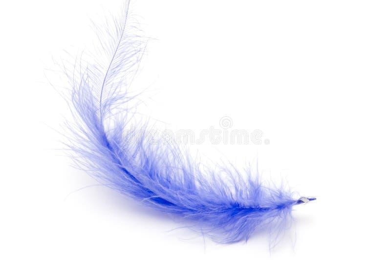 blå fjäder arkivfoto