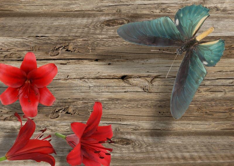Blå fjäril och röd lilja arkivfoton