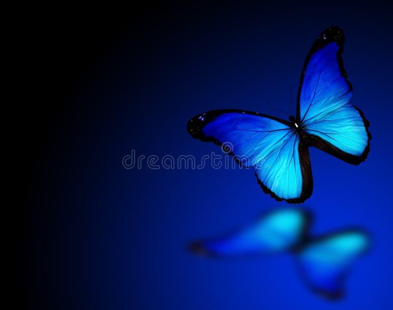 Blå fjäril på bakgrund royaltyfri illustrationer