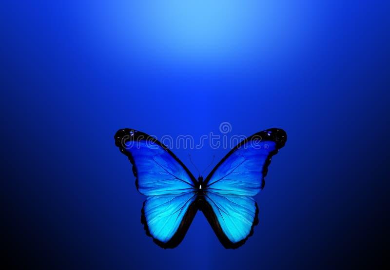 Blå fjäril på blå bakgrund arkivbild