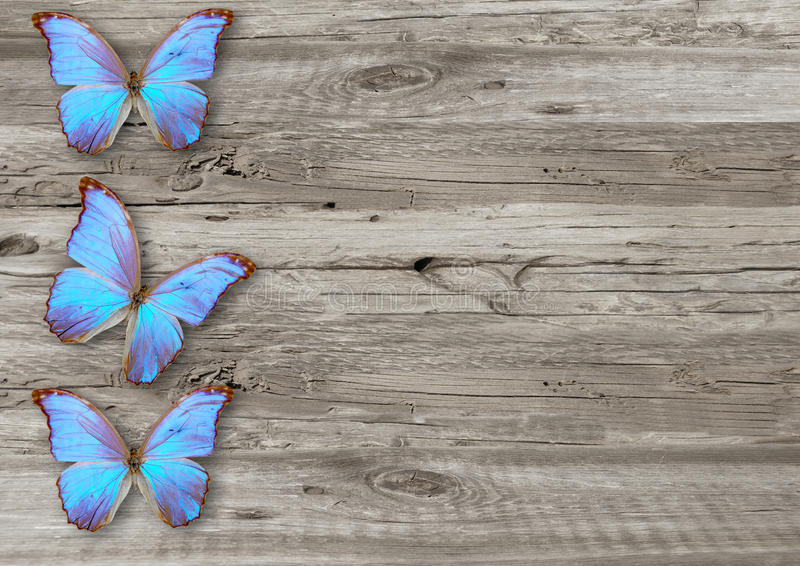 Blå fjäril på wood bakgrund royaltyfria foton