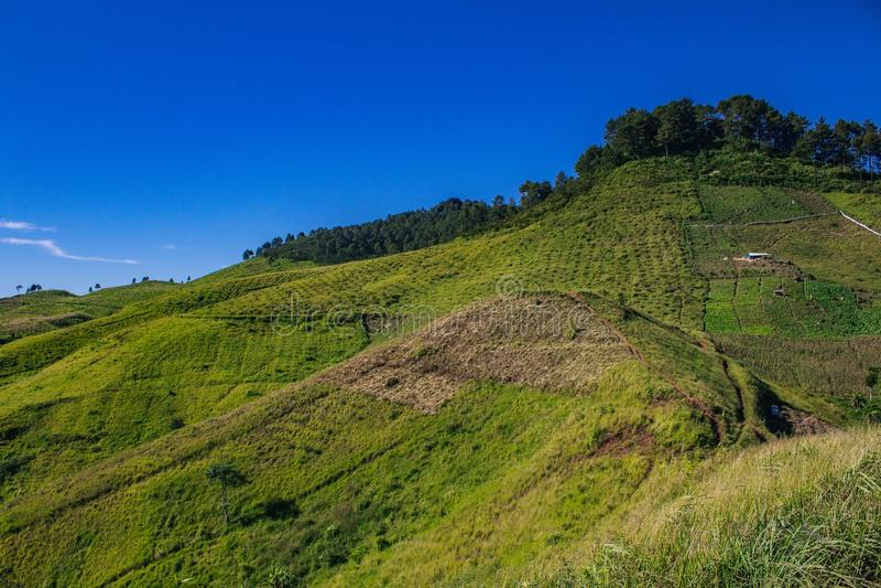 Blå grön kulle arkivbild