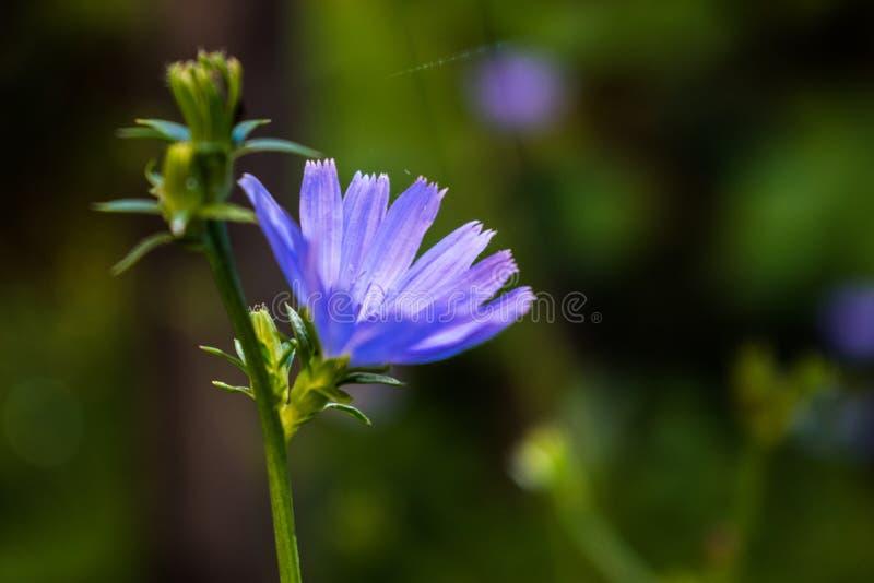 Blå höstblomma på gräsmattan arkivfoto