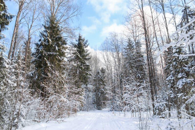 Blå himmel över vinterskog arkivbild