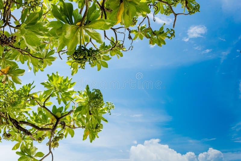 Blå himmel - Maldiverna royaltyfri fotografi
