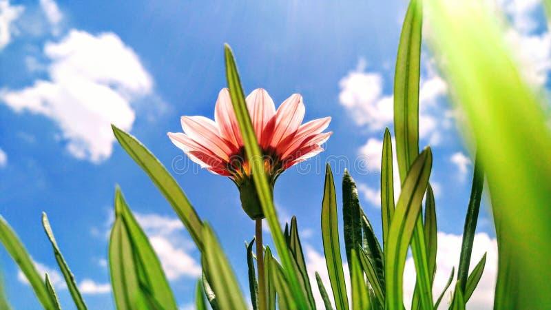 Blå himmel med att glöda för blomma arkivbild