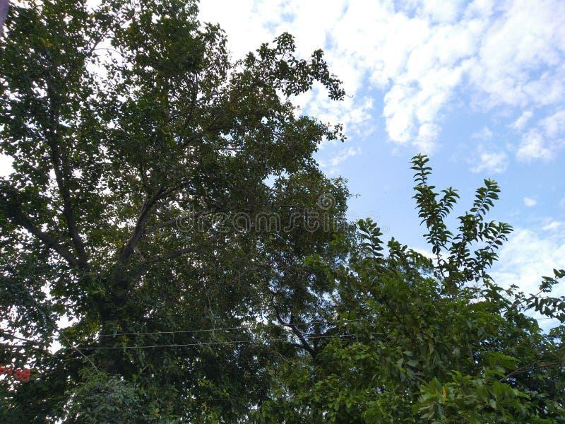 Blå himmel med grönt naturmoln fotografering för bildbyråer