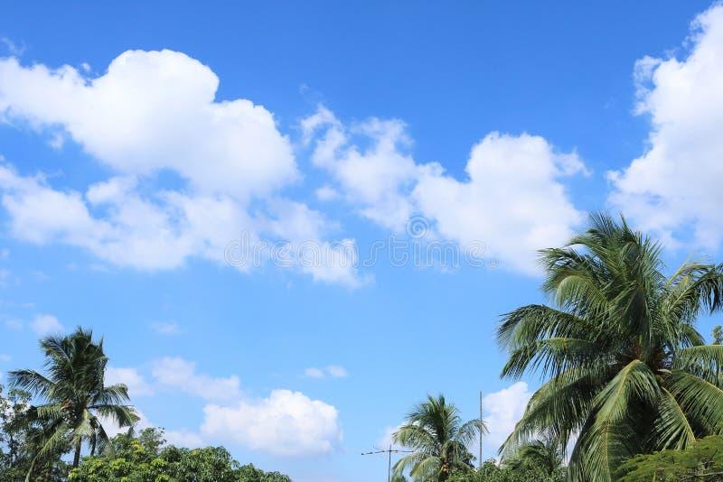 Blå himmel med moln och palmträdet royaltyfri foto