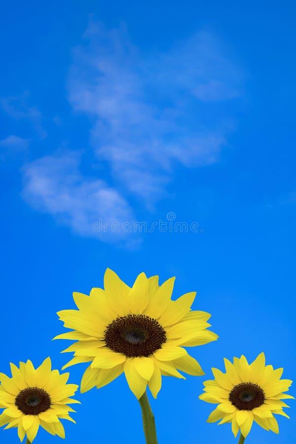 Blå himmel med solrosor arkivfoton
