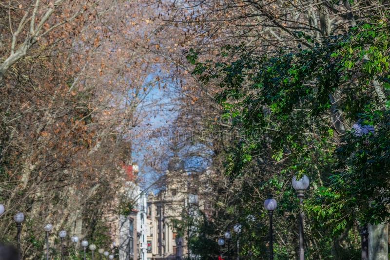 Blå himmel med träd från stad parkerar arkivfoto