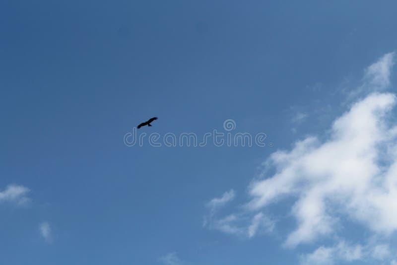 Blå himmel med vita moln och en sväva fågel, i dagen arkivbild