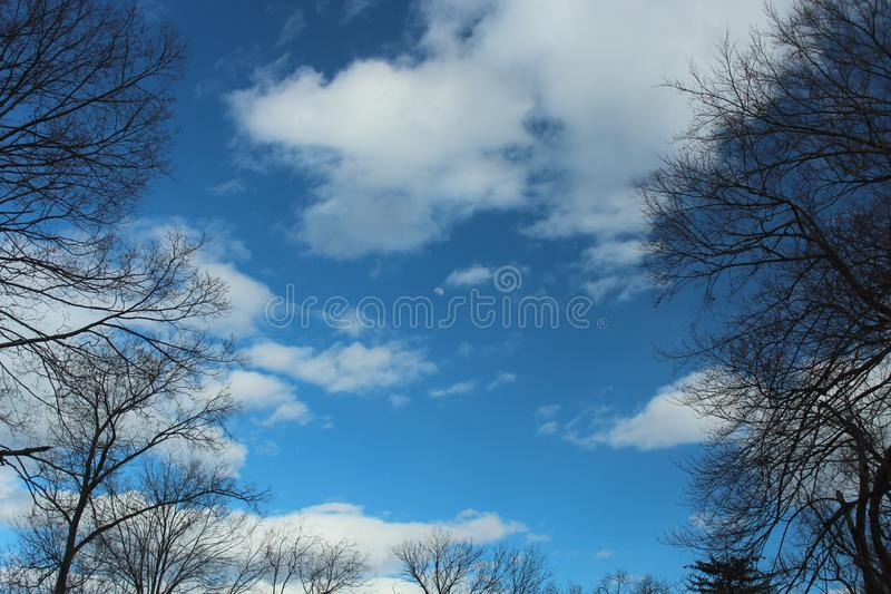 Blå himmel, moln och måne som inramas av högväxta träd arkivfoton
