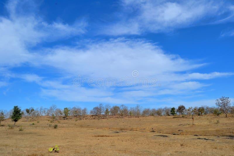 Blå himmel, moln och skog royaltyfri foto