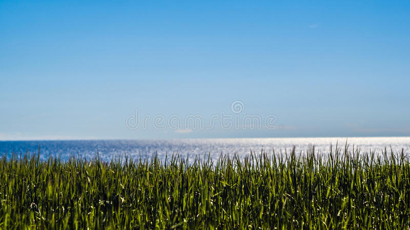 Blå himmel och baltiskt hav och vetefält arkivfoton