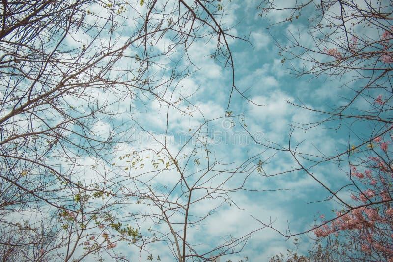 Blå himmel och filial av trädet royaltyfri foto