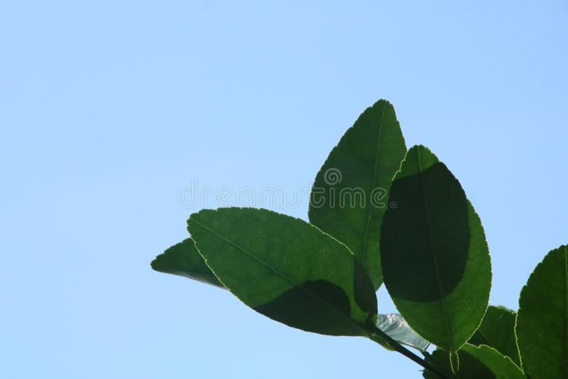 Blå himmel och gräsplanblad arkivbild