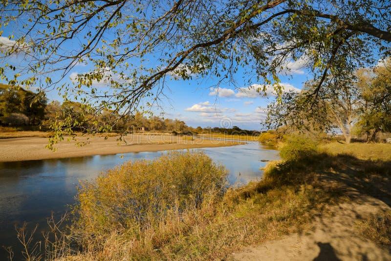 Blå himmel och gult gräs i hösten Mongoliet royaltyfria bilder