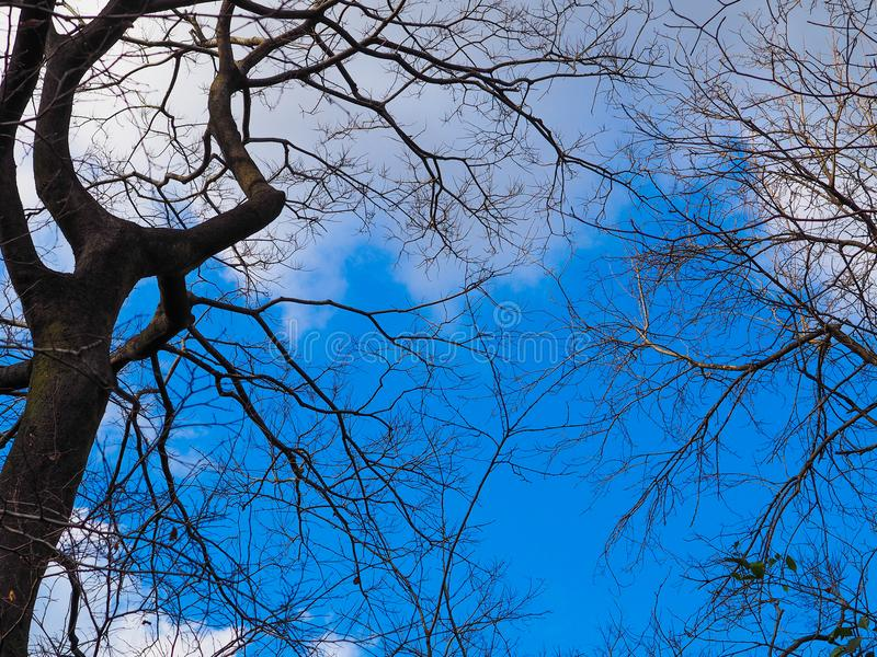 Blå himmel och moln ovanför silhouetted filialer arkivbilder
