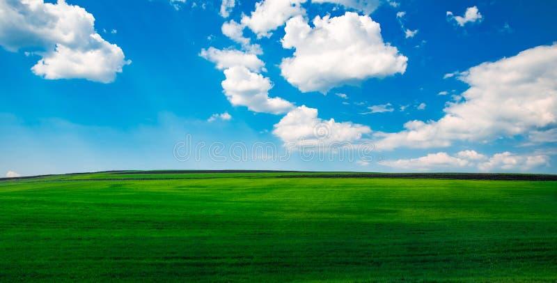 Blå himmel och vita moln över en grön fältvårtid fotografering för bildbyråer