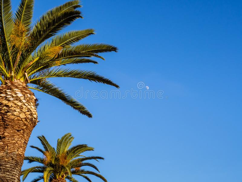 Blå himmel, palmträd och liten måne som skiner i himlen royaltyfria bilder