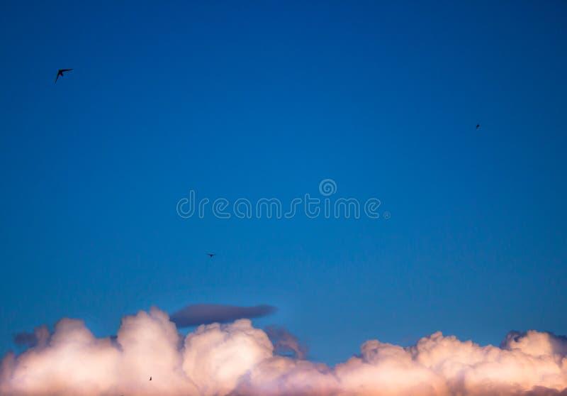 Blå himmel, vit fördunklar och att flyga uppsöker arkivfoton