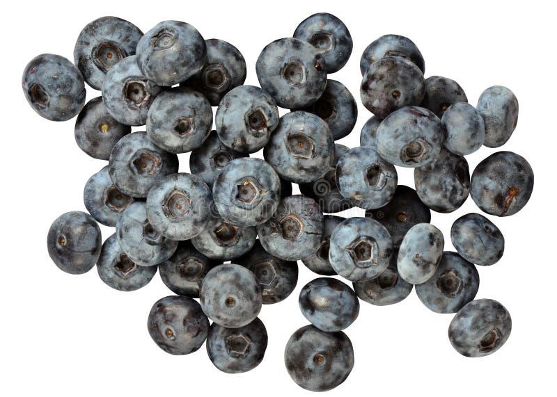 Blå huckleberry royaltyfri foto