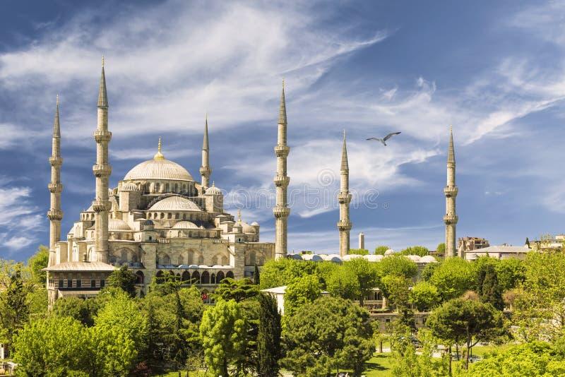 blå istanbul moskékalkon arkivfoton