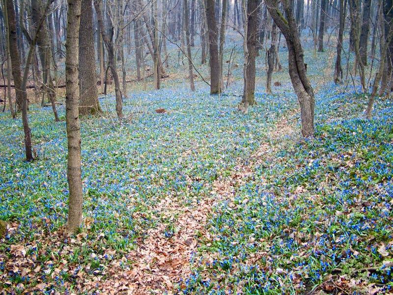 blå jordning royaltyfri bild