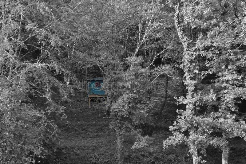 Blå kabin i träden royaltyfri foto