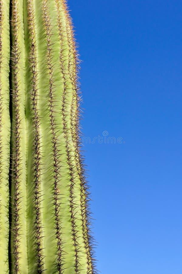 blå kaktussaguarosky arkivfoton