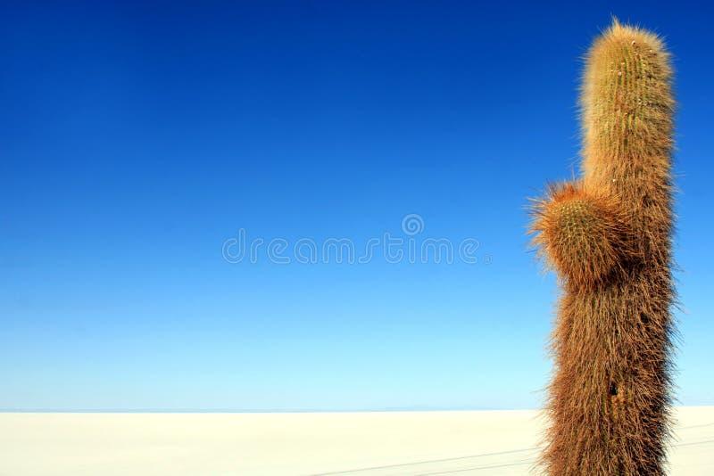 blå kaktussky arkivfoto