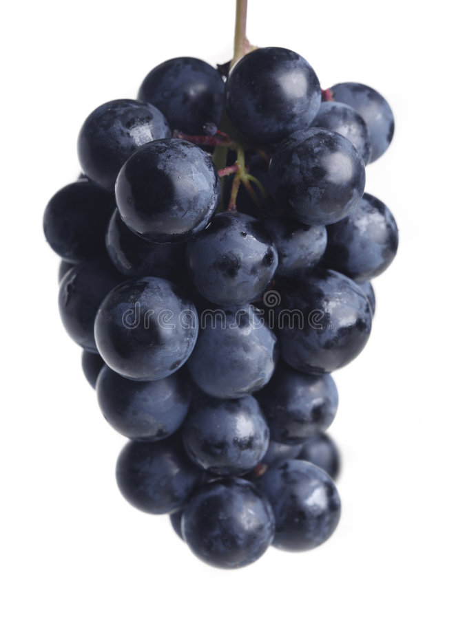 blå klungadruva royaltyfri fotografi