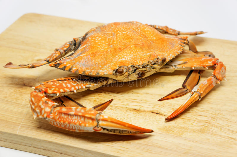 blå krabba arkivfoto