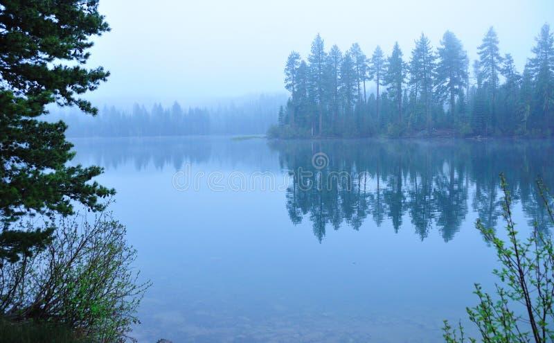 blå lakemorgon fotografering för bildbyråer
