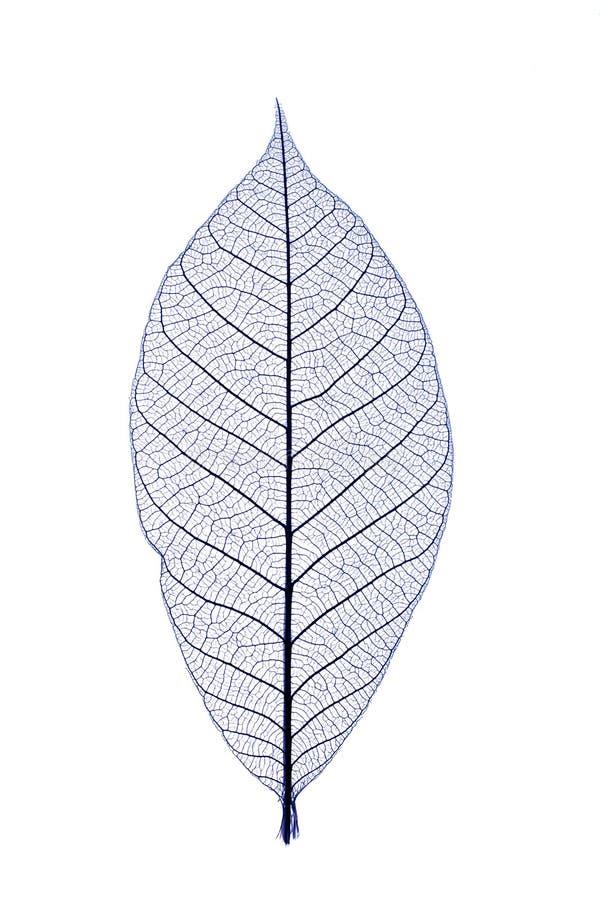 blå leaf royaltyfri bild