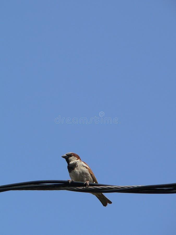 Download Blå liten sky för 4 fågel arkivfoto. Bild av songbird, springtime - 981338
