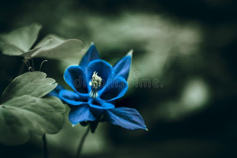Blå magisk blomma fotografering för bildbyråer