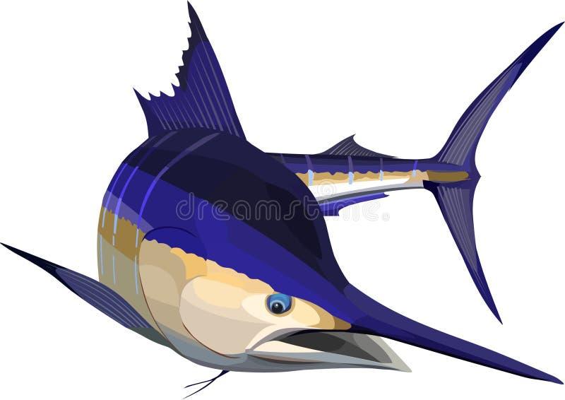 blå marlin vektor illustrationer