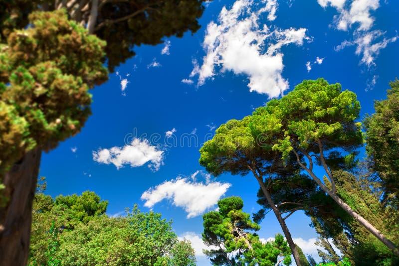 blå mest forrest grön sky royaltyfri fotografi