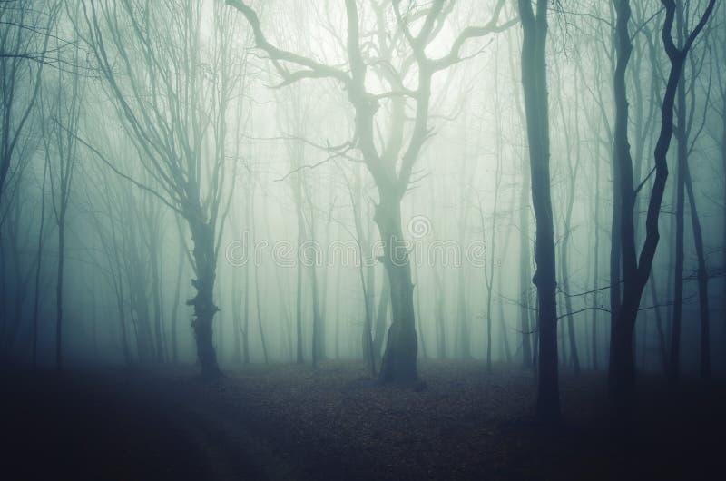 Blå mist i mörk mystisk skog arkivbilder
