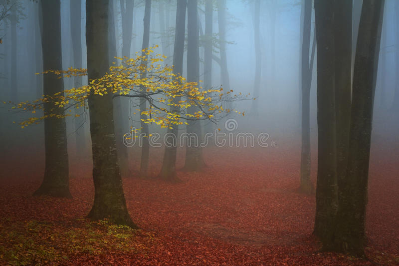 Blå mist och ett träd med gulingsidor i skogen fotografering för bildbyråer