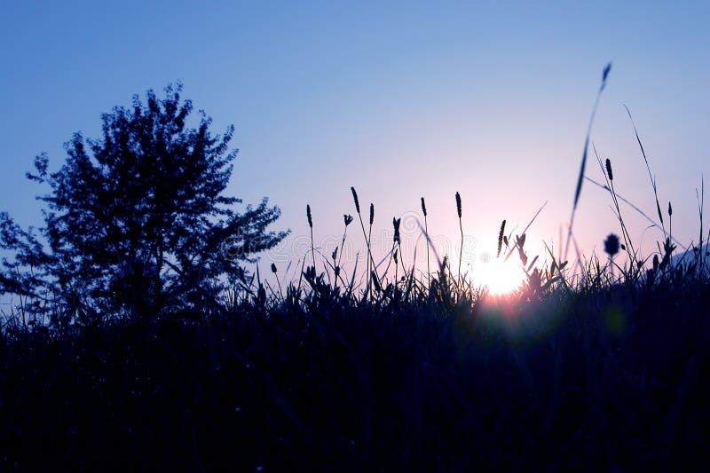 blå morgon arkivfoto