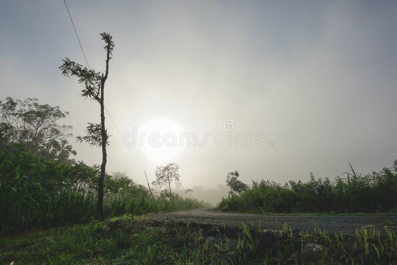 Blå morgon royaltyfri fotografi